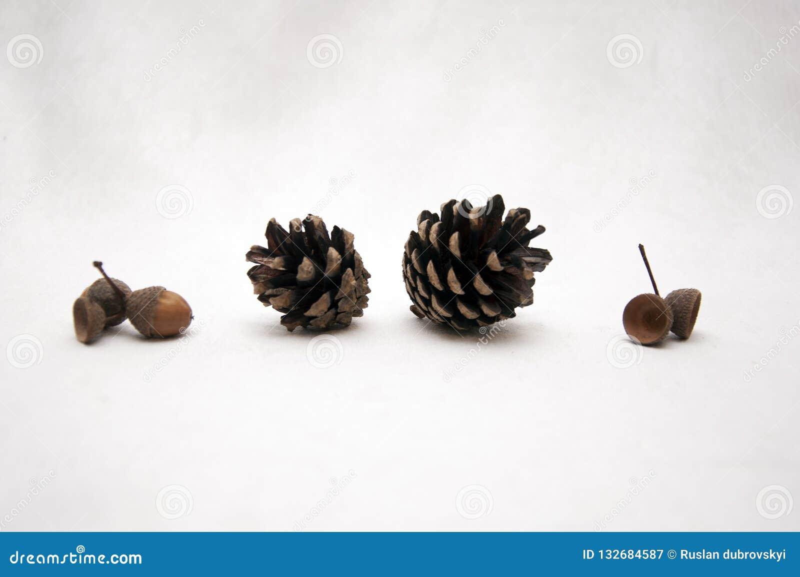 Cone da floresta