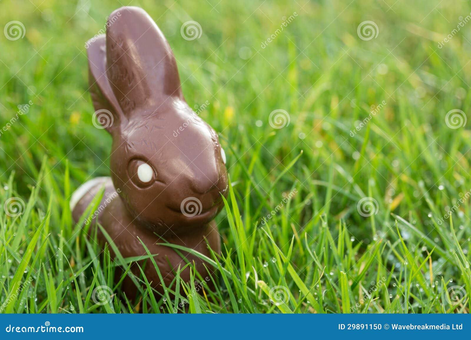 Conejito del chocolate en la hierba