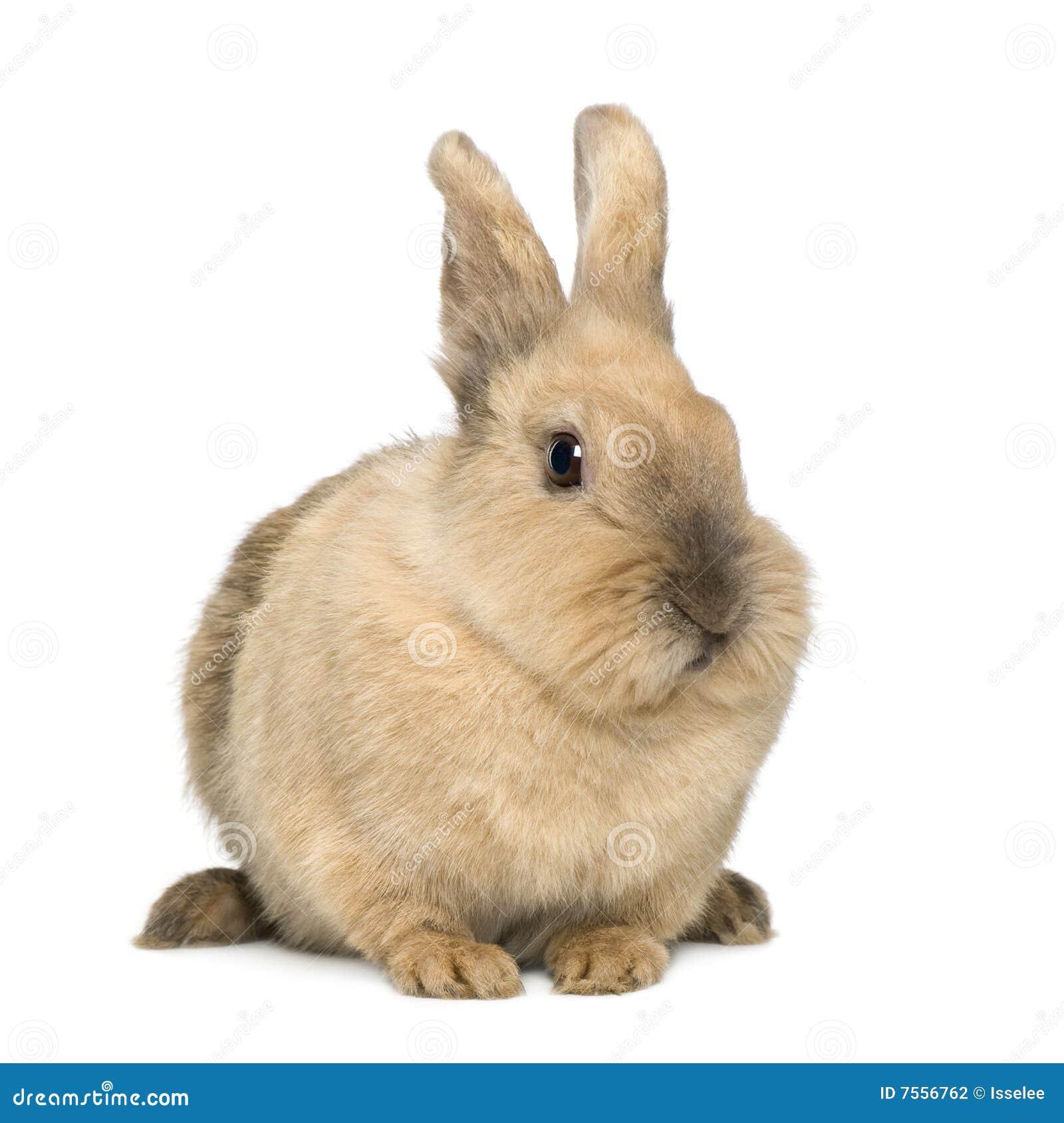 Conejo (4 años)