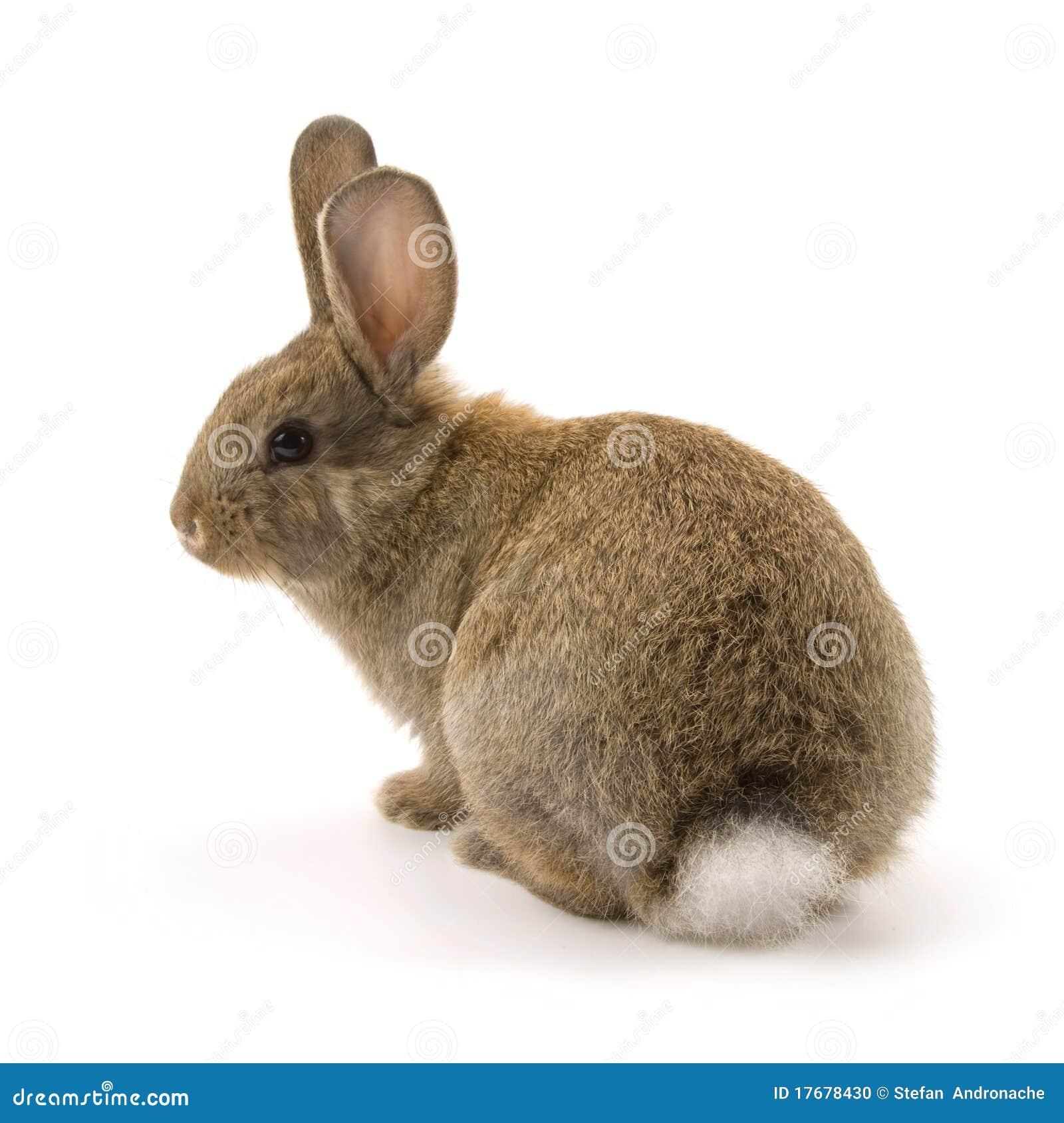 Conejo adorable aislado en blanco