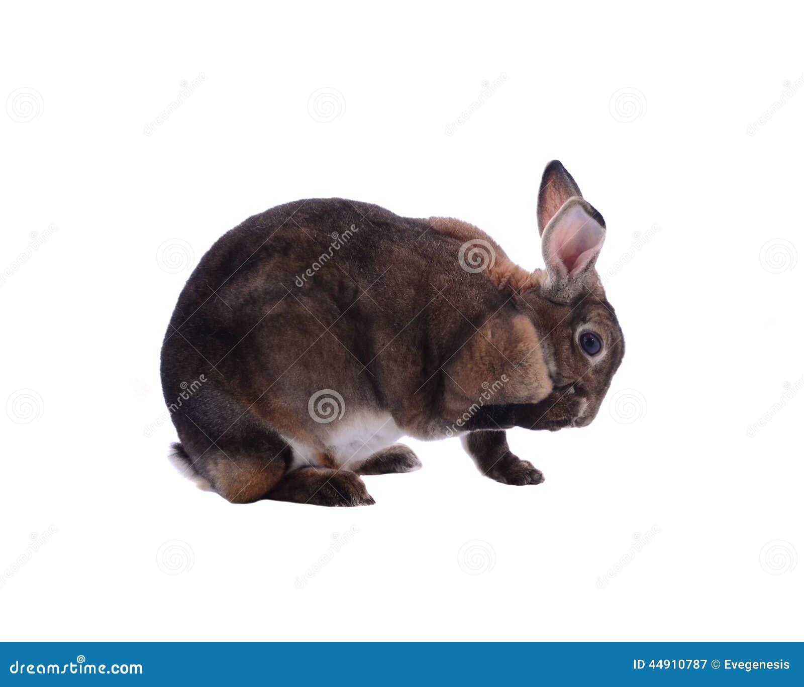 Conejo adorable aislado en un fondo blanco
