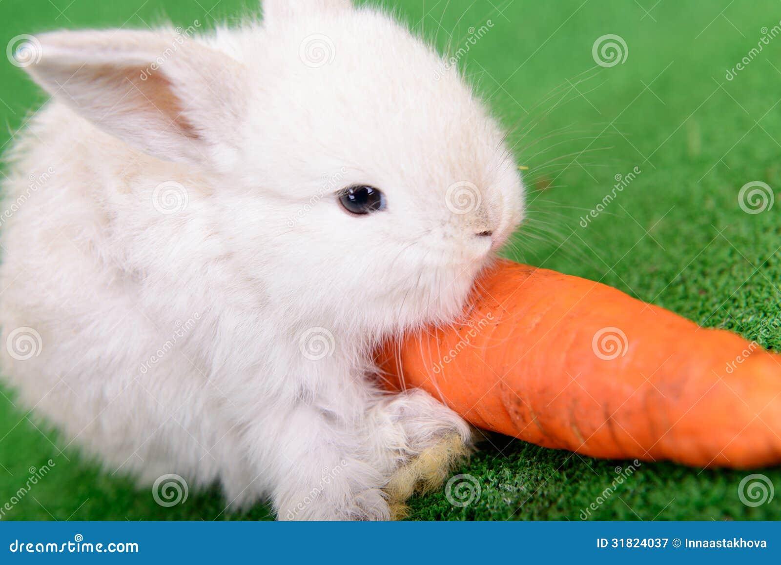 Conejo con la zanahoria imagen de archivo imagen de o dos for La zanahoria es una hortaliza
