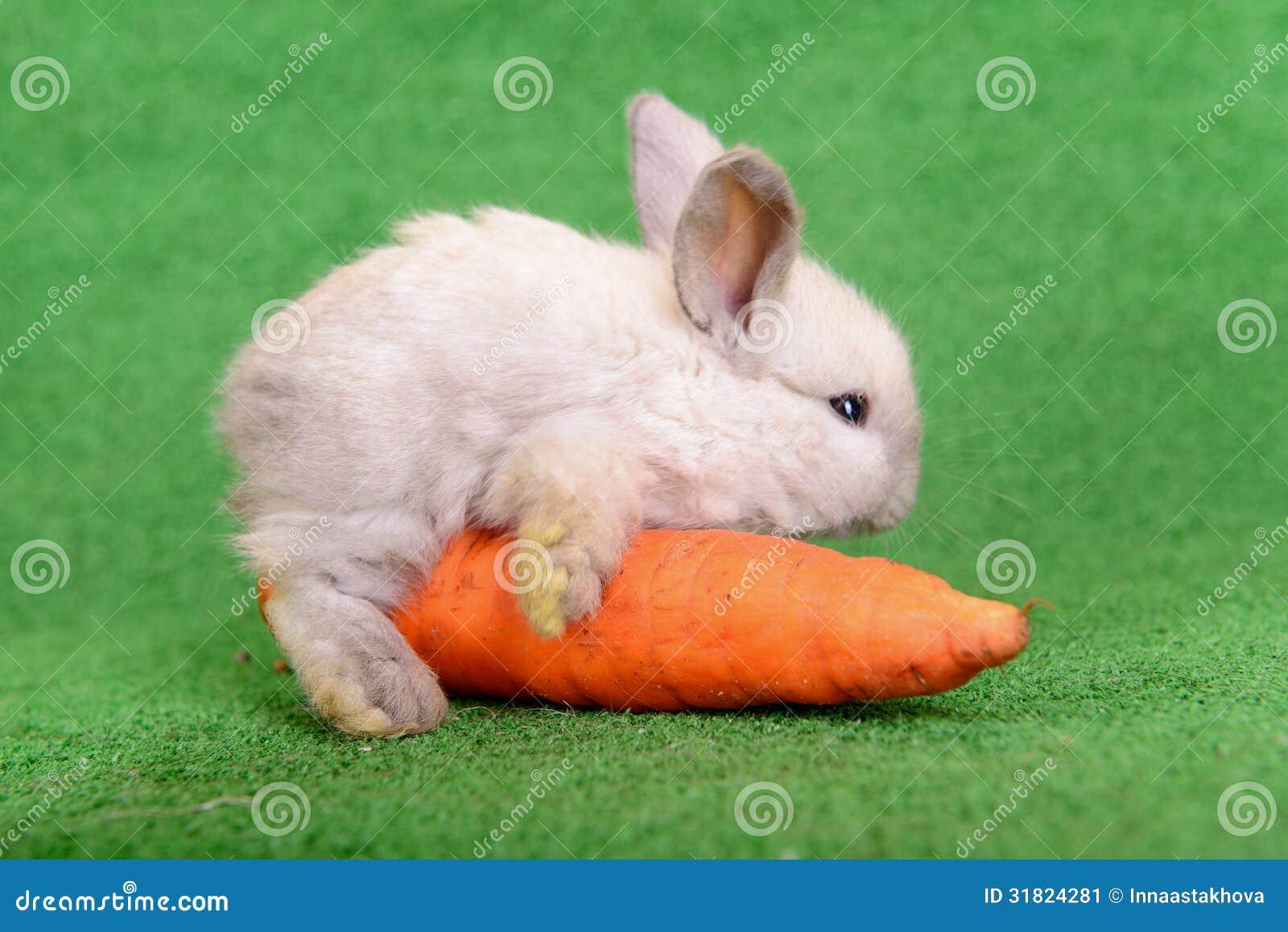 Conejo con la zanahoria imagen de archivo imagen 31824281 for La zanahoria es una hortaliza