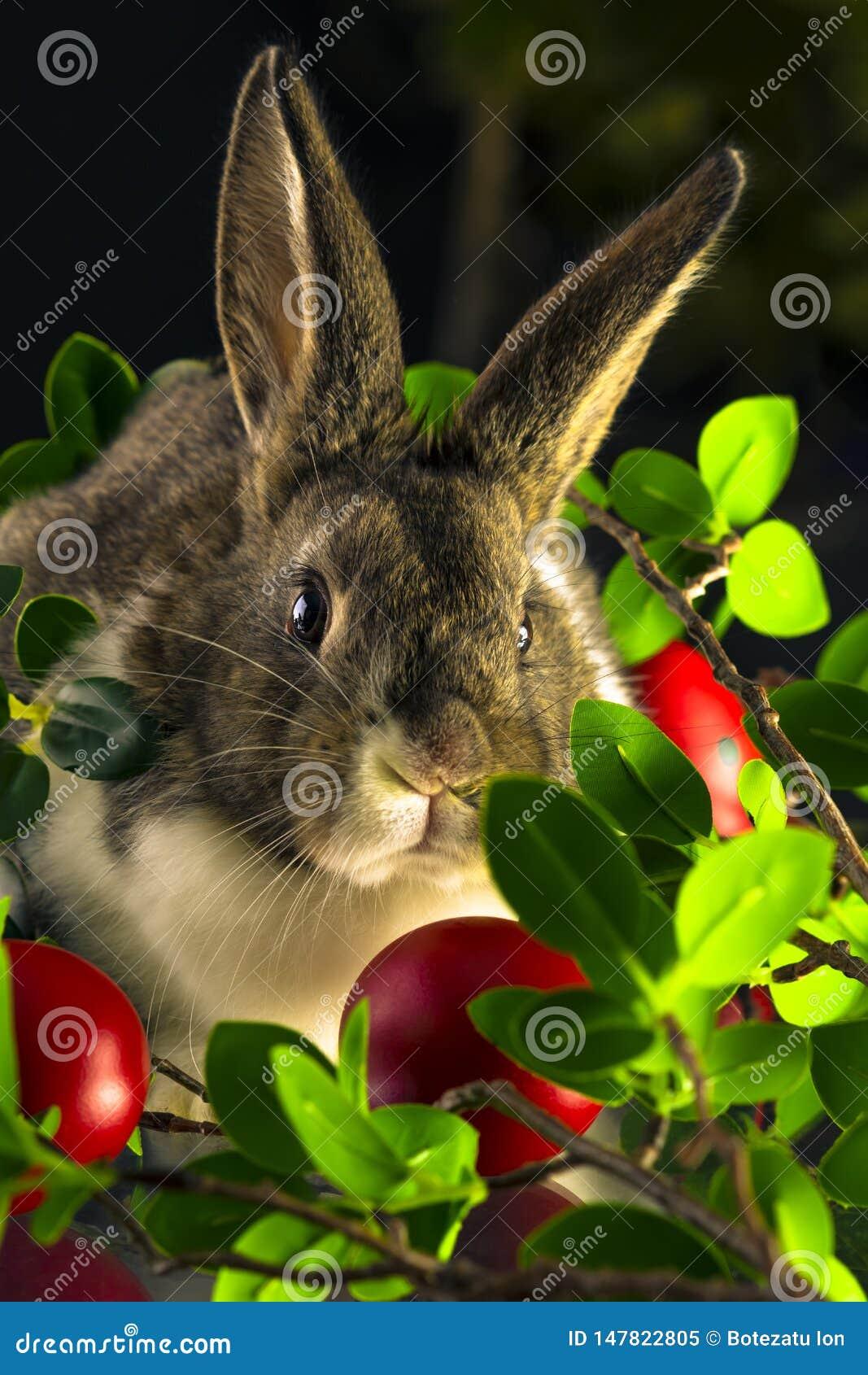 Conejo con los huevos de Pascua rojos