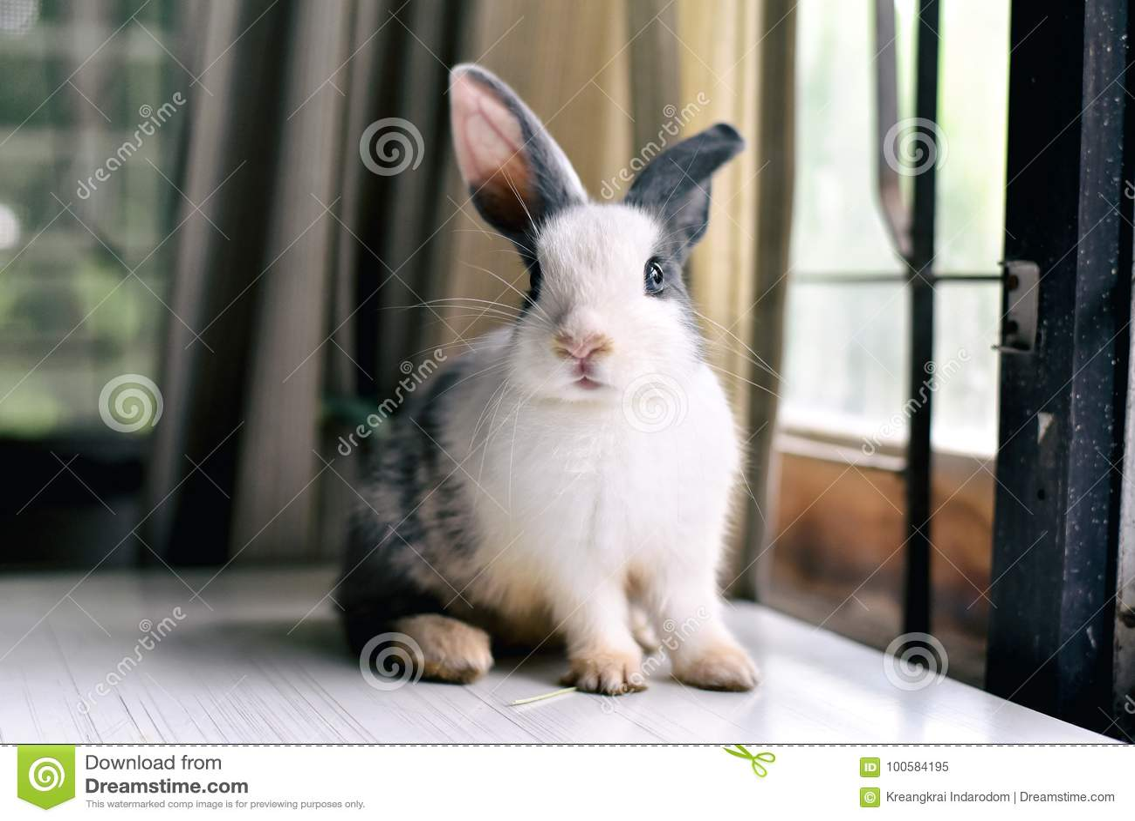 Conejo de conejito gris que parece frontward al espectador, poco conejito que se sienta en el escritorio blanco