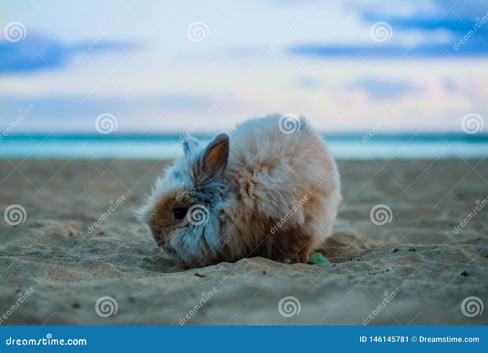 Conejo divertido en los animales dom?sticos de la playa