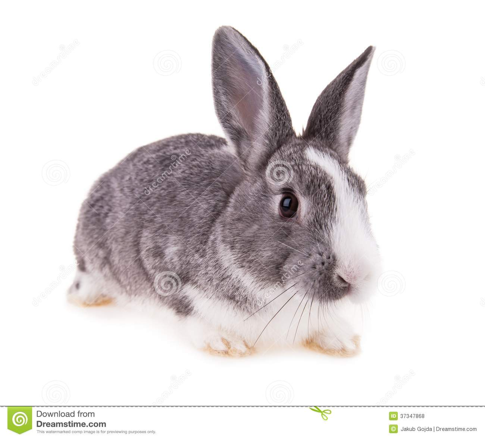 Conejo en el fondo blanco