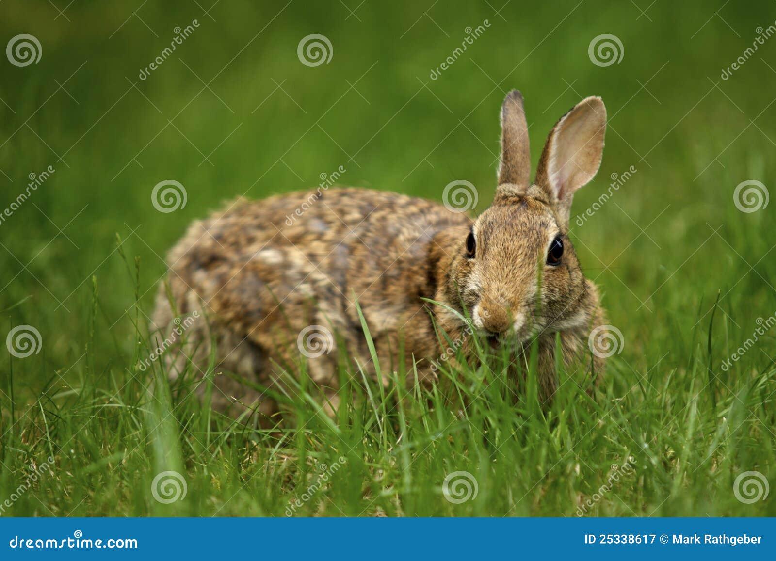Conejo en la hierba 4
