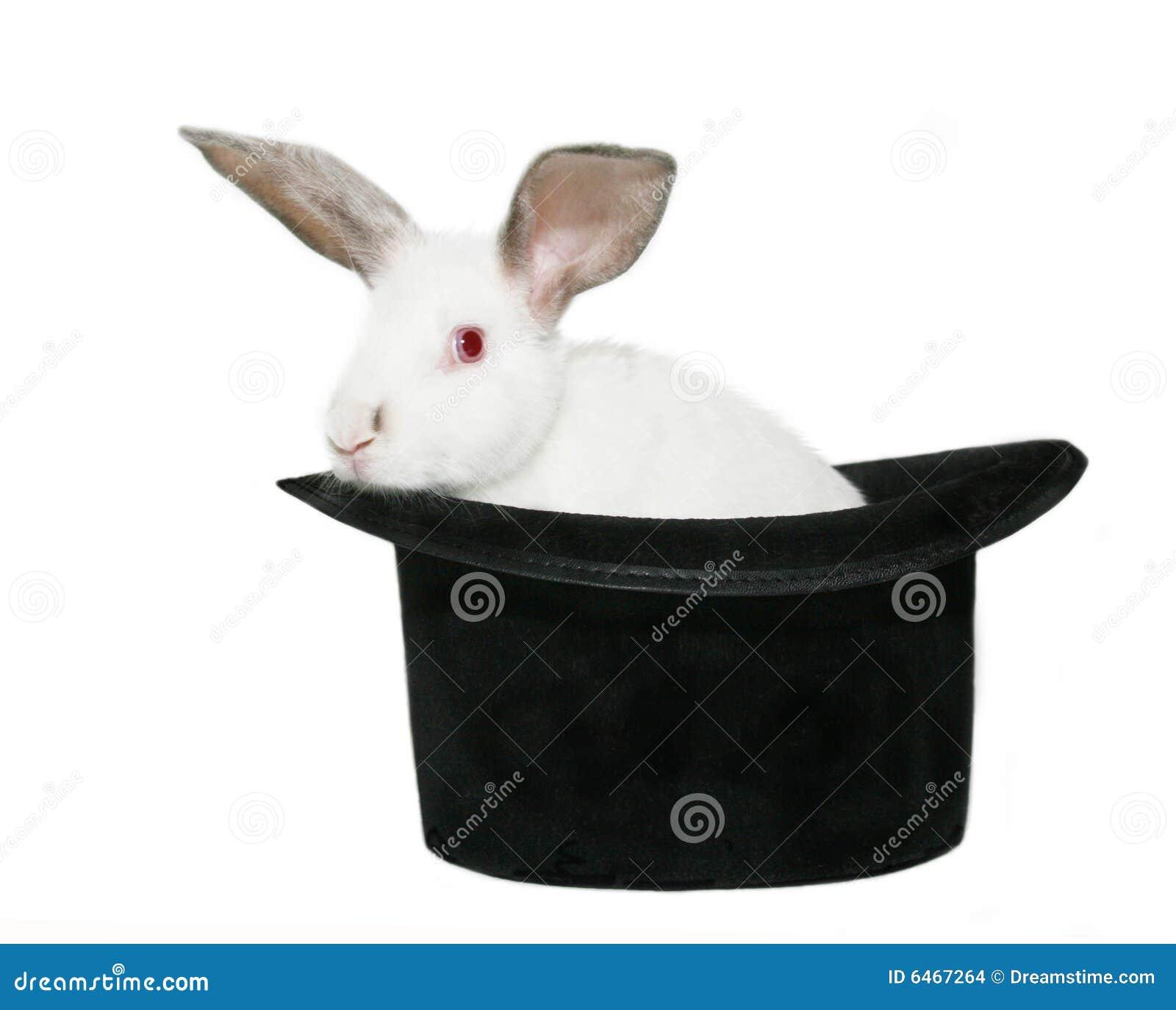Conejo en un sombrero