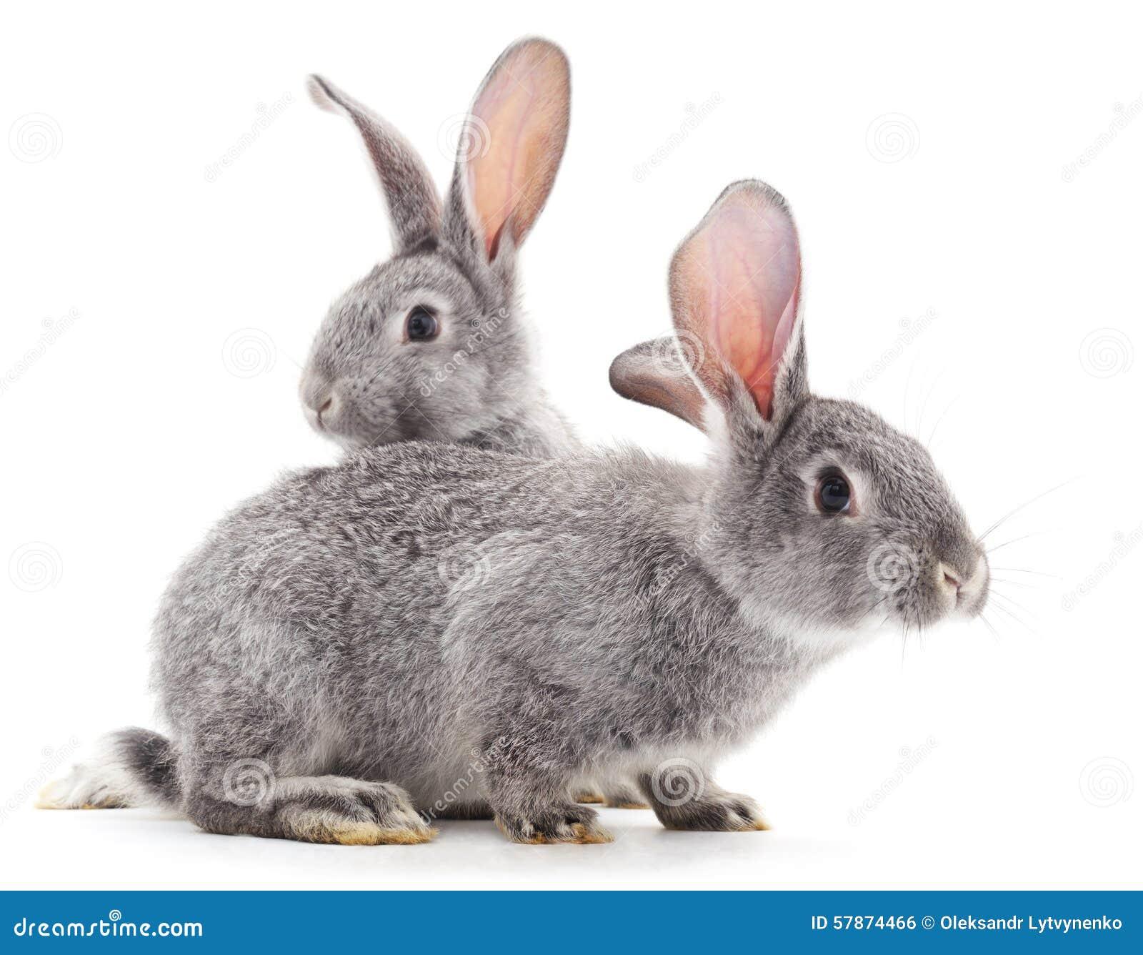 Conejos del bebé