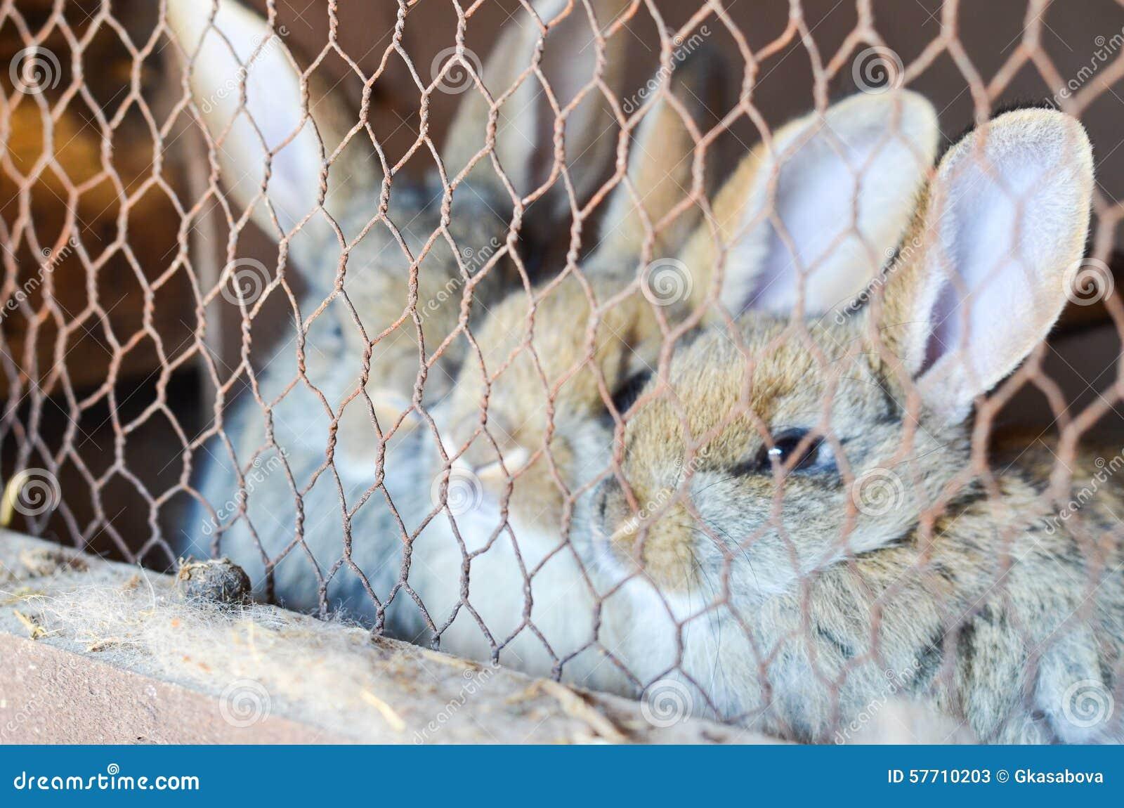 Conejos en una jaula