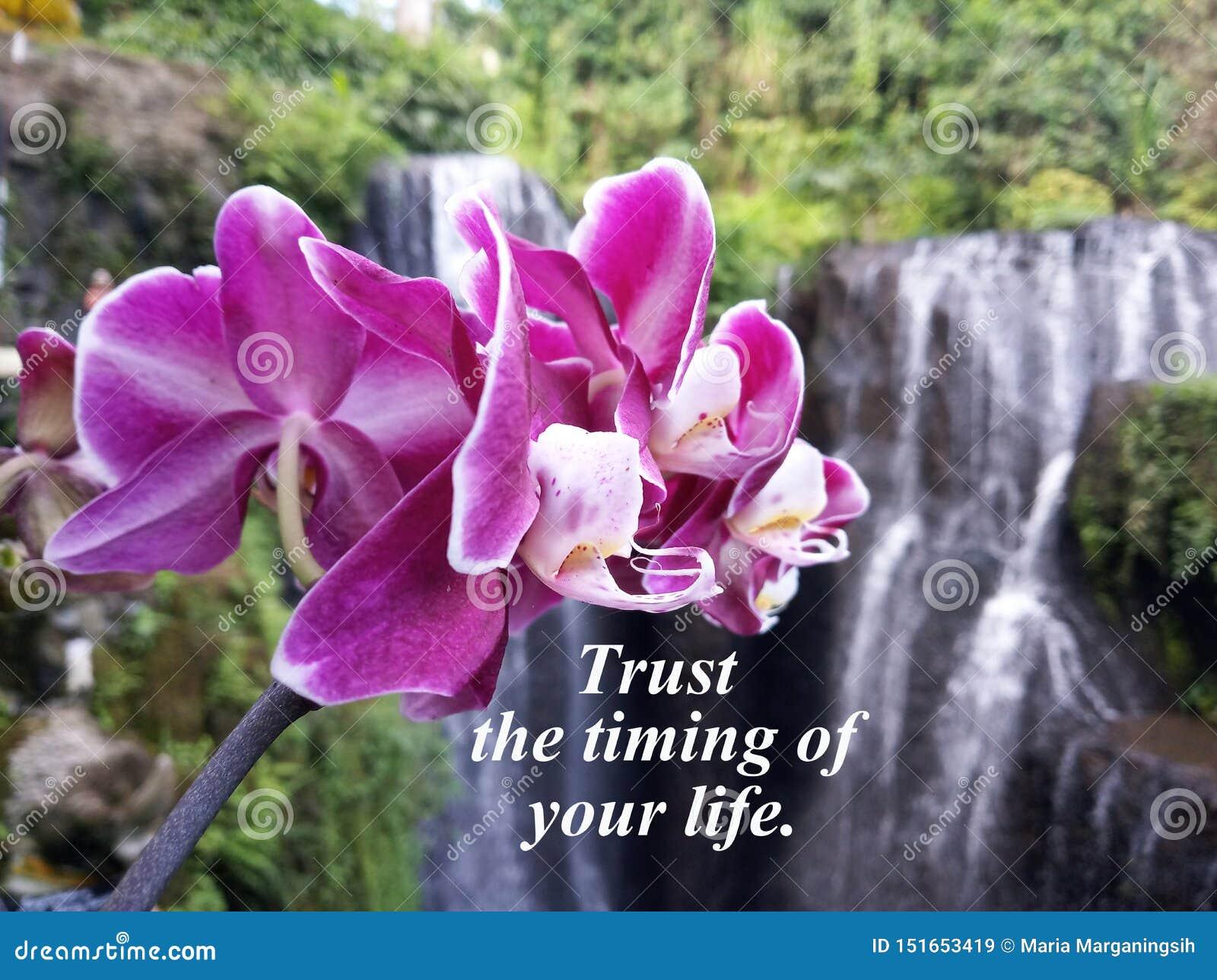 Confianza inspirada de la cita la sincronización de su vida Con la orquídea púrpura hermosa y el fondo borroso de la cascada de l