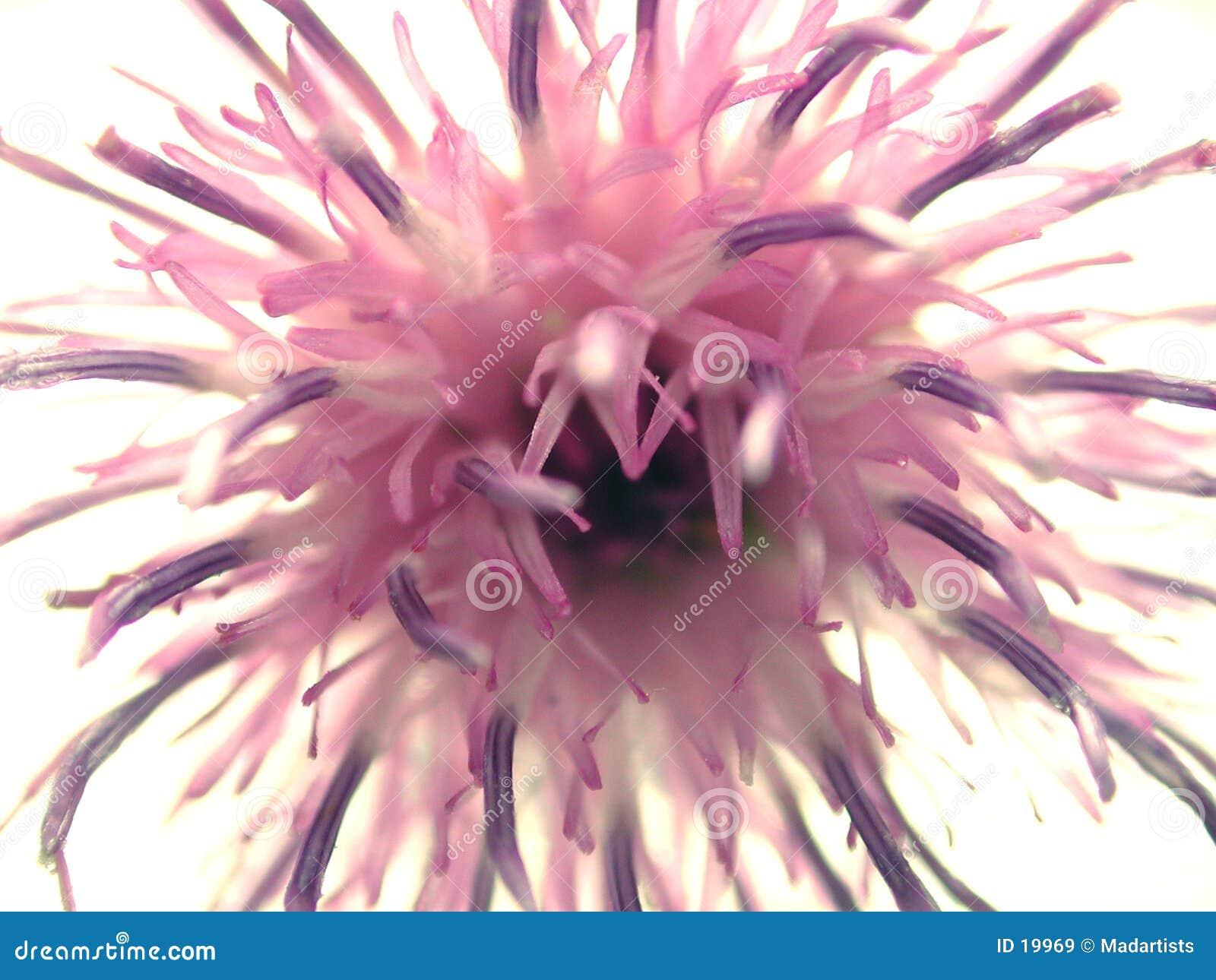 Configuration abstraite de pétales de fleur