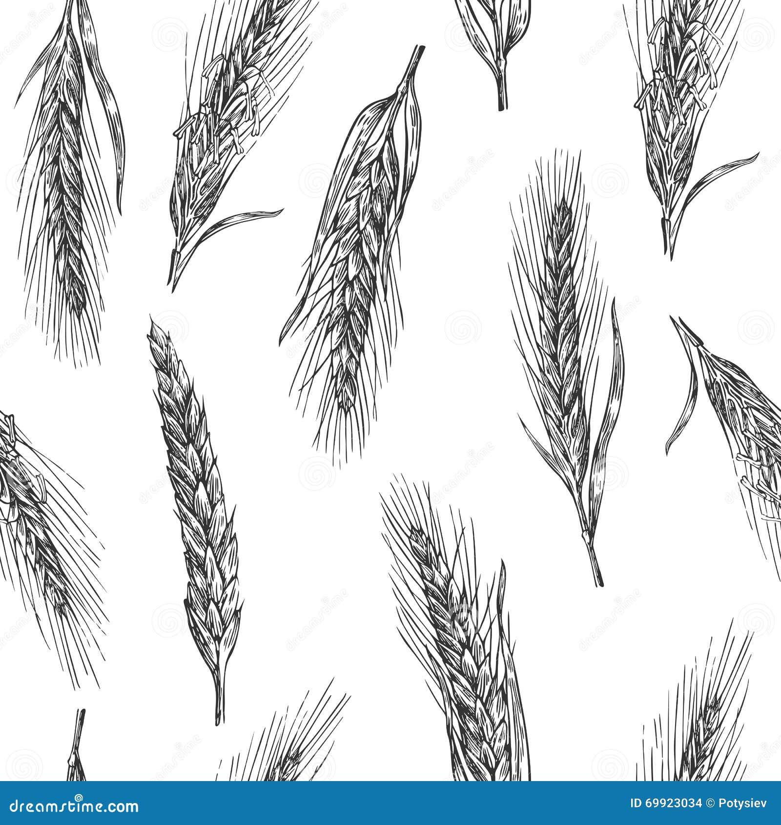 Configuration sans joint avec des oreilles de blé Couleur noire et blanche Croquis de boulangerie Illustration tirée par la main