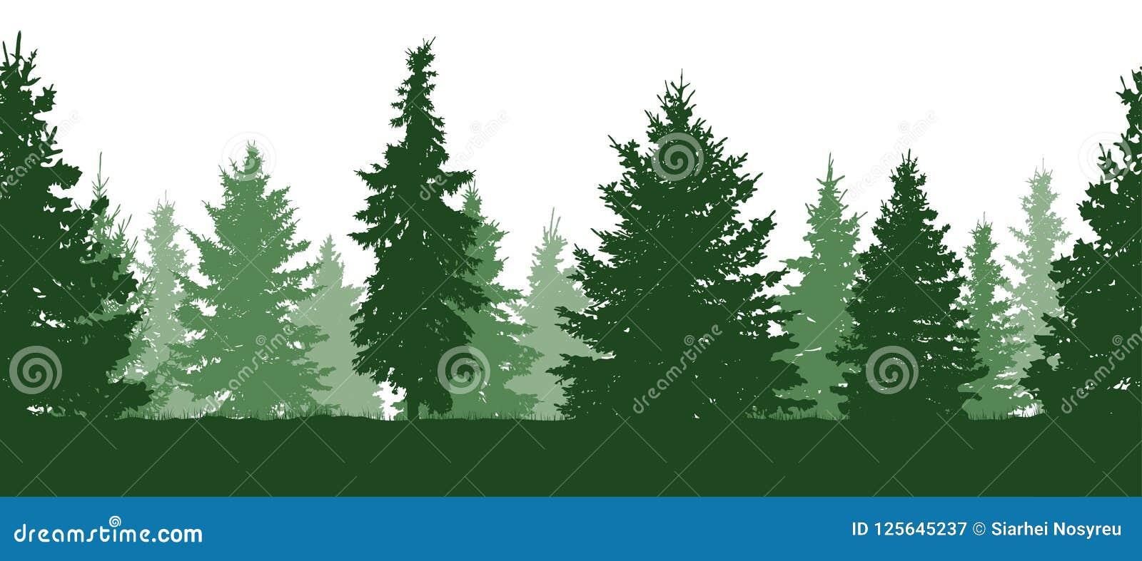 Configuration sans joint Forêt, silhouette verte de sapins Vecteur