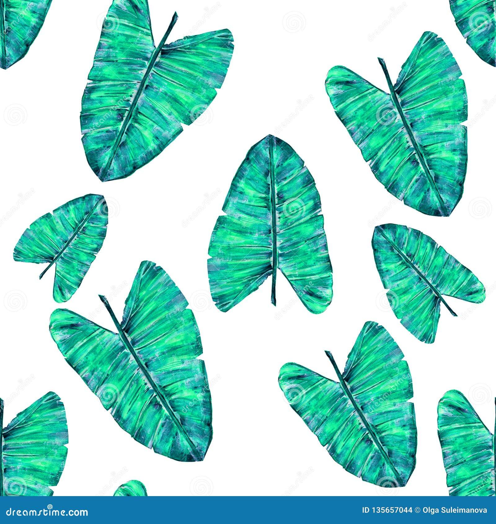 Configuration tropicale de lames Monstera vert de feuille sans couture