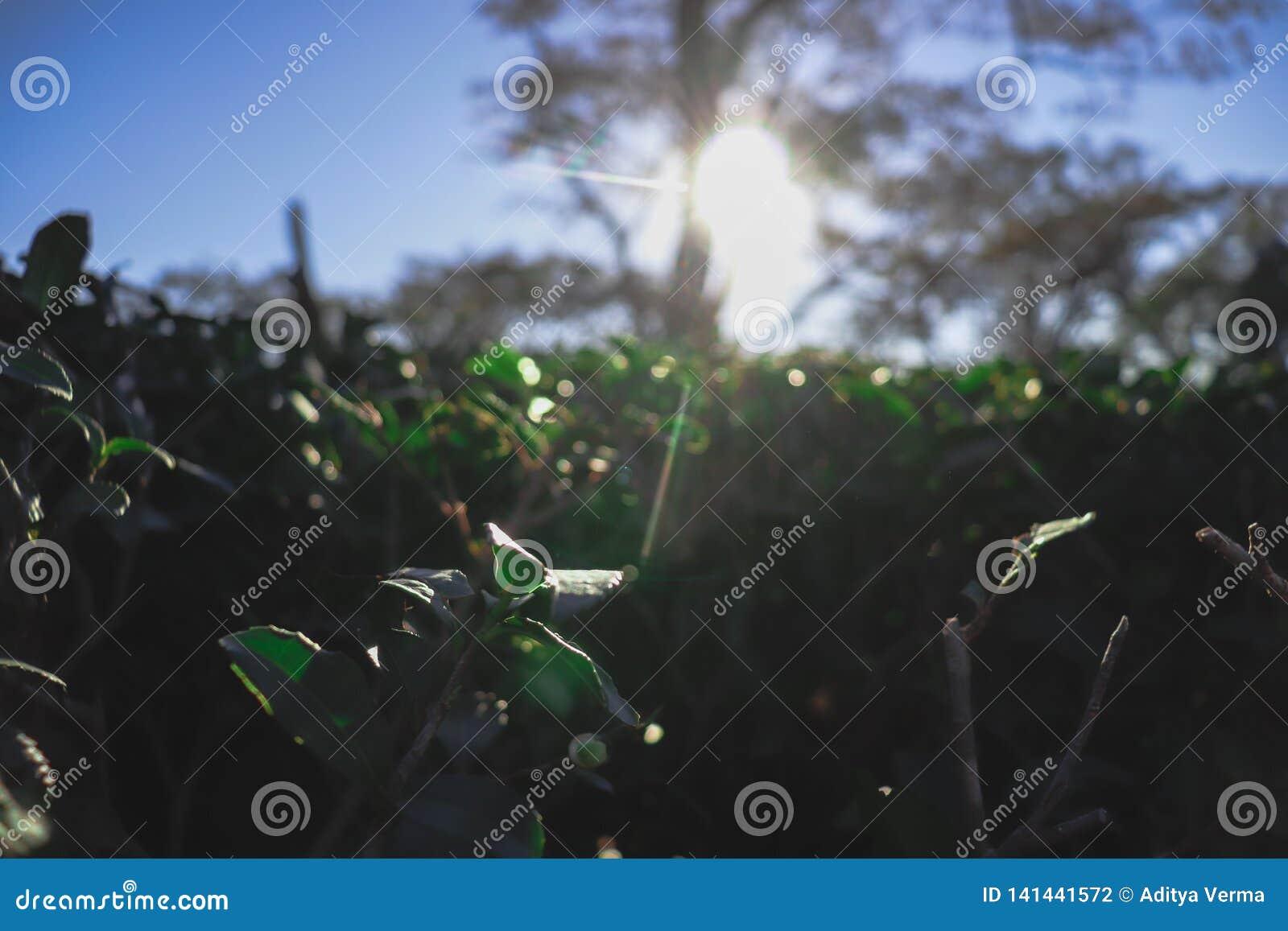 Configuration verte de jardin de lame (mer