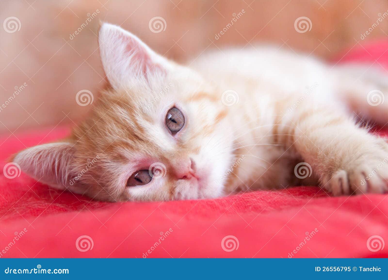 Configurations rouges de chaton sur un rouge