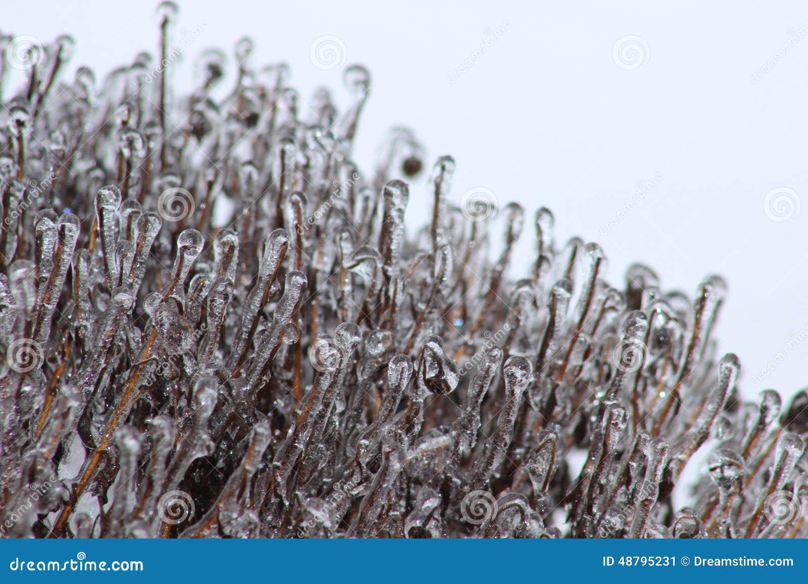 Congelador meridional