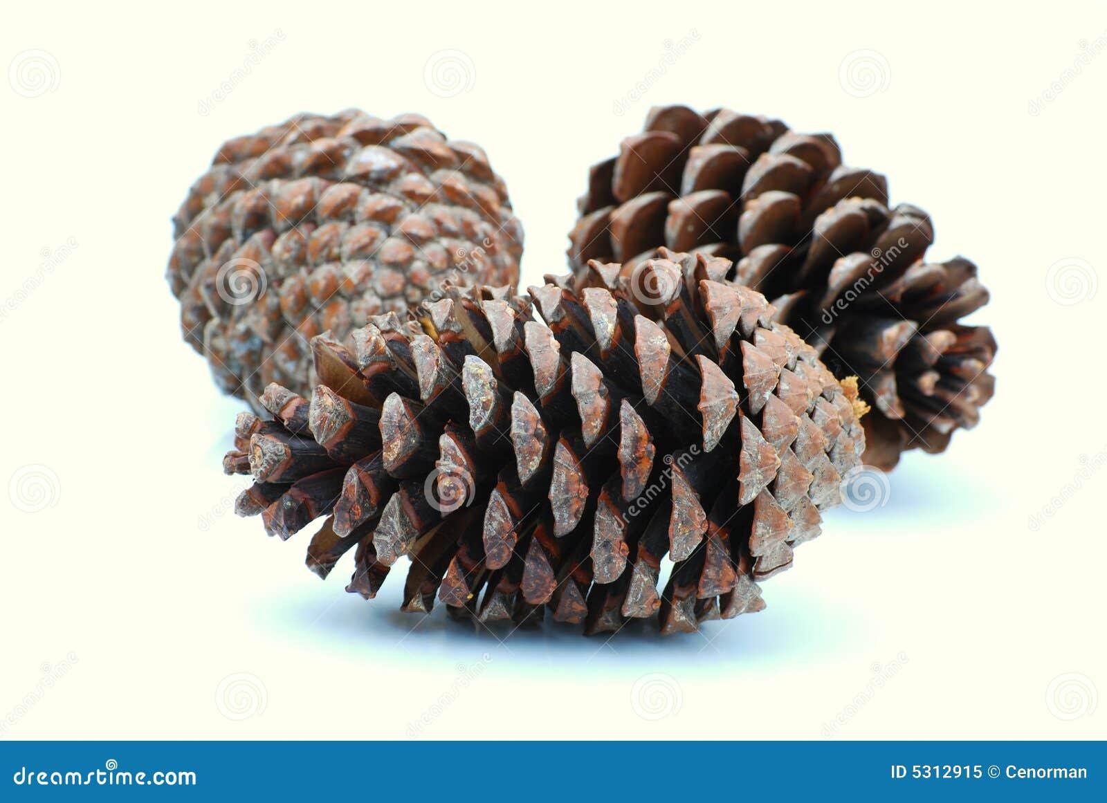 Download Coni del pino immagine stock. Immagine di boscoso, albero - 5312915