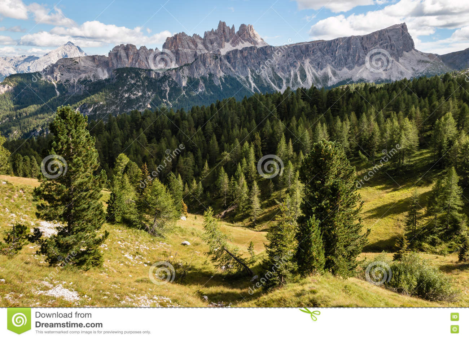 Conifer las przy Croda da Lago masywem w Południowych Tyrol dolomitach