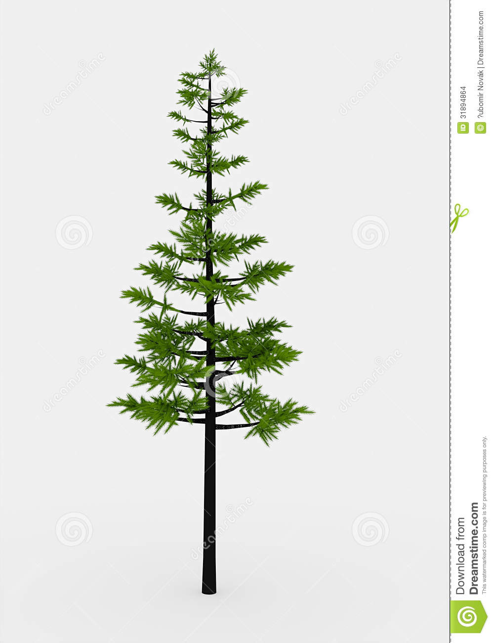 Conifer Tree Stock Images - Image: 31894864
