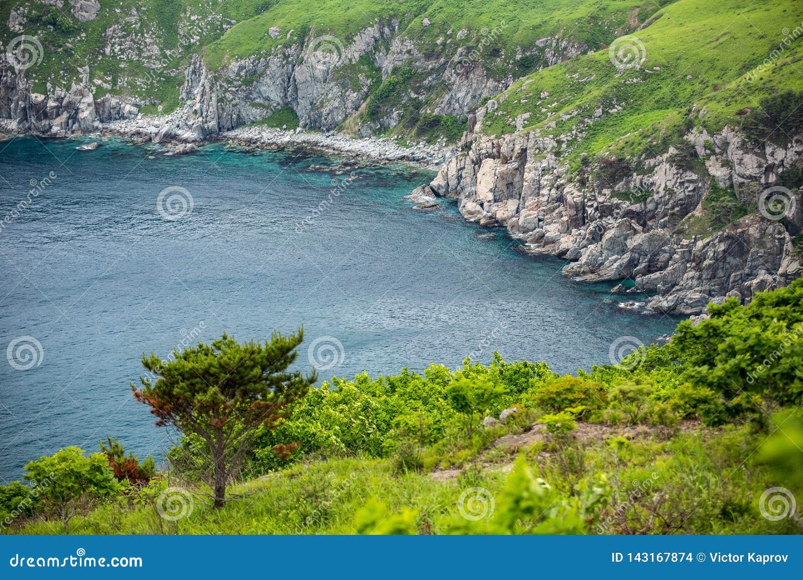 Conifera sui precedenti del mare e delle rocce