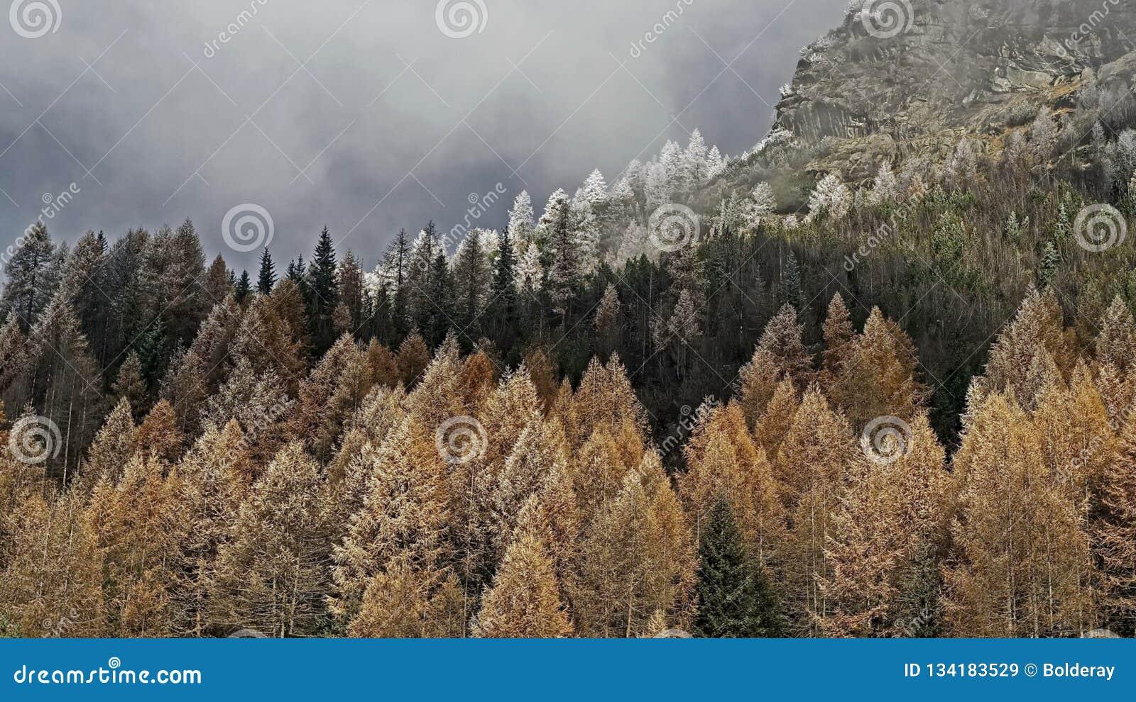 Coniferous древесины дороги гор пущи Изморозь утра на деревьях первый hoarfrost