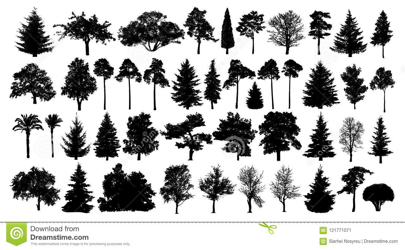 Coniferous forest. Trees set silhouette. Isolated tree on white background.