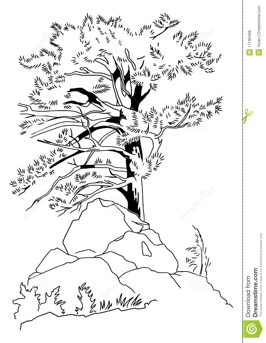 how to draw a coniferous tree