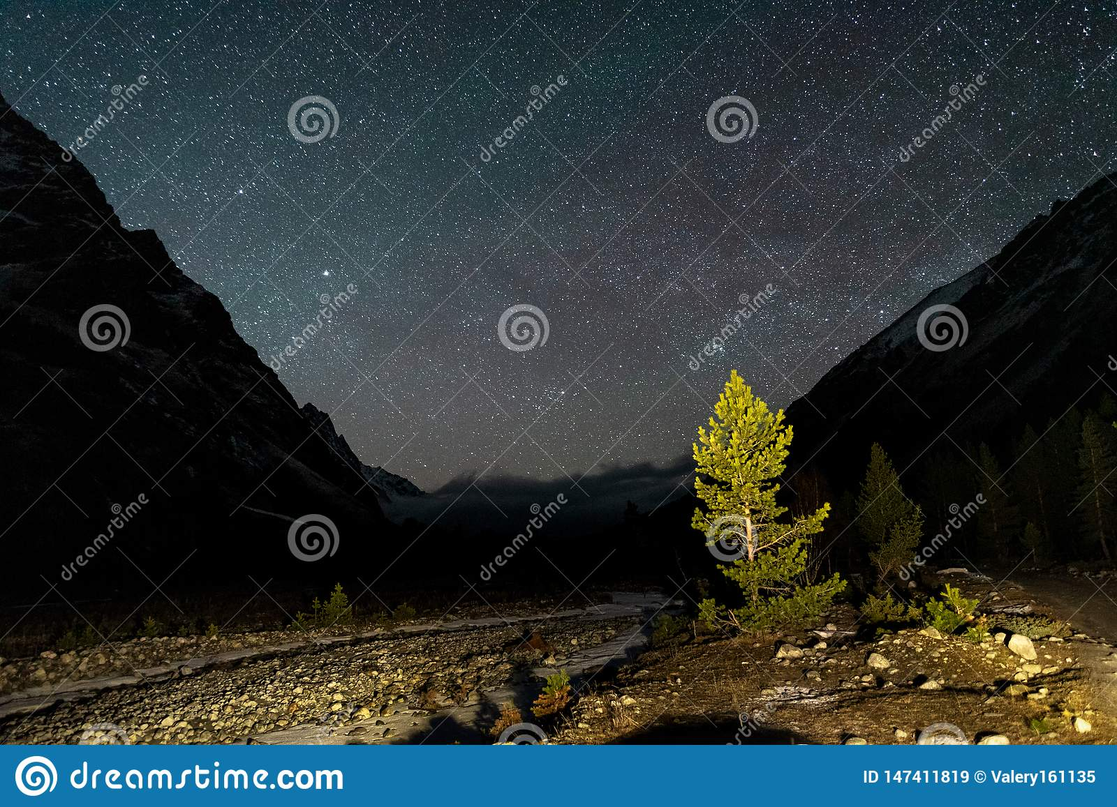 Coniferous trees with mountain gorge at night under a starry sky