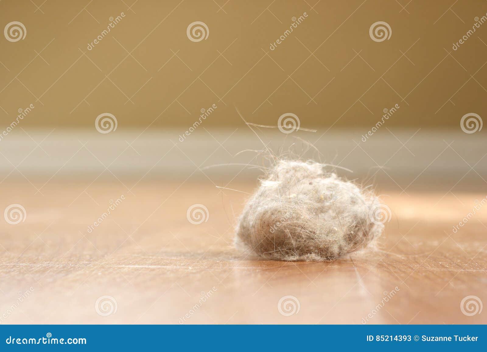 Coniglietto della polvere