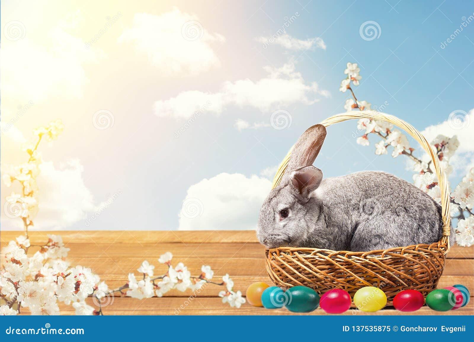 Coniglietto di pasqua con le uova in un canestro
