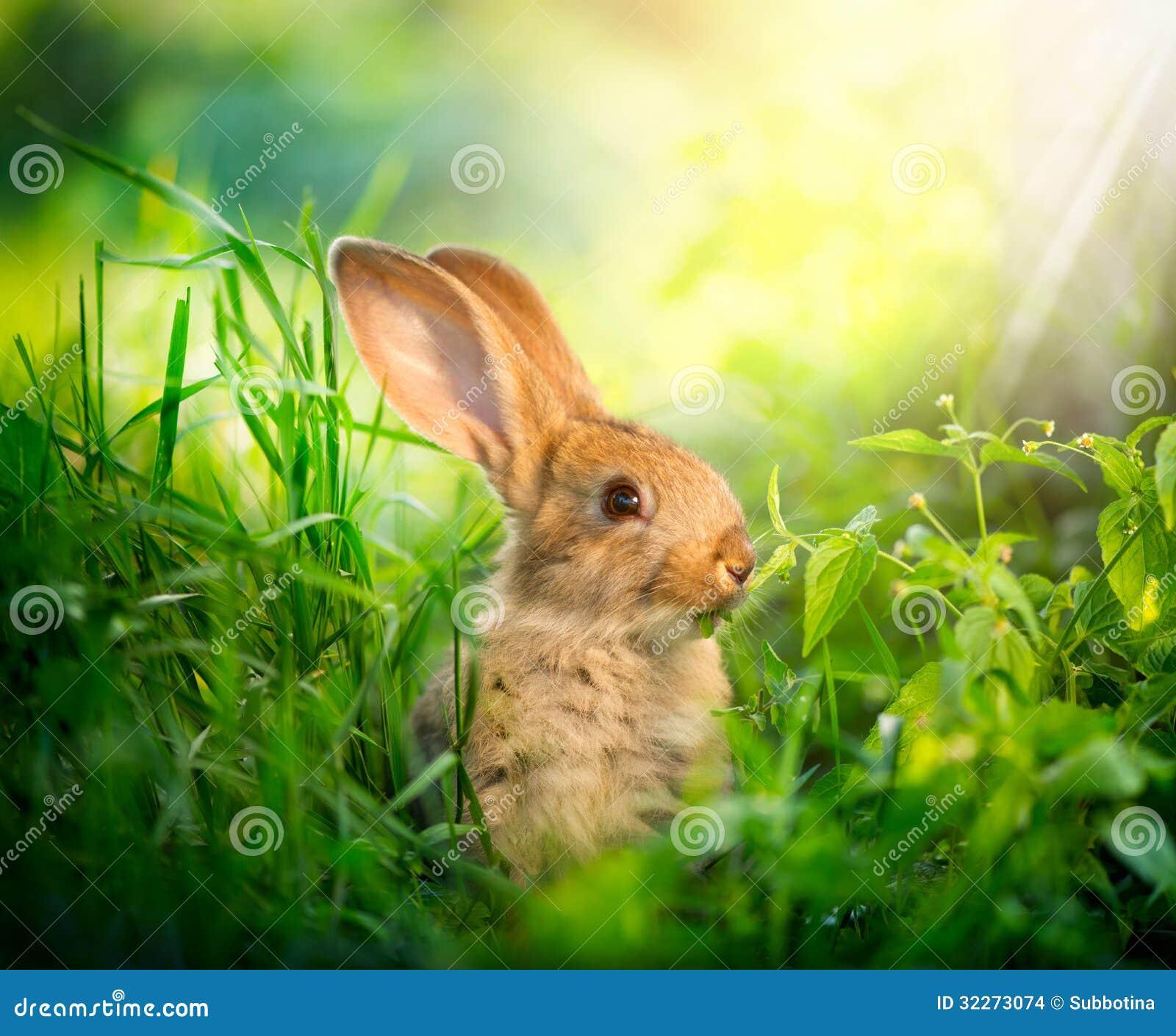 Coniglietto di pasqua piccolo sveglio