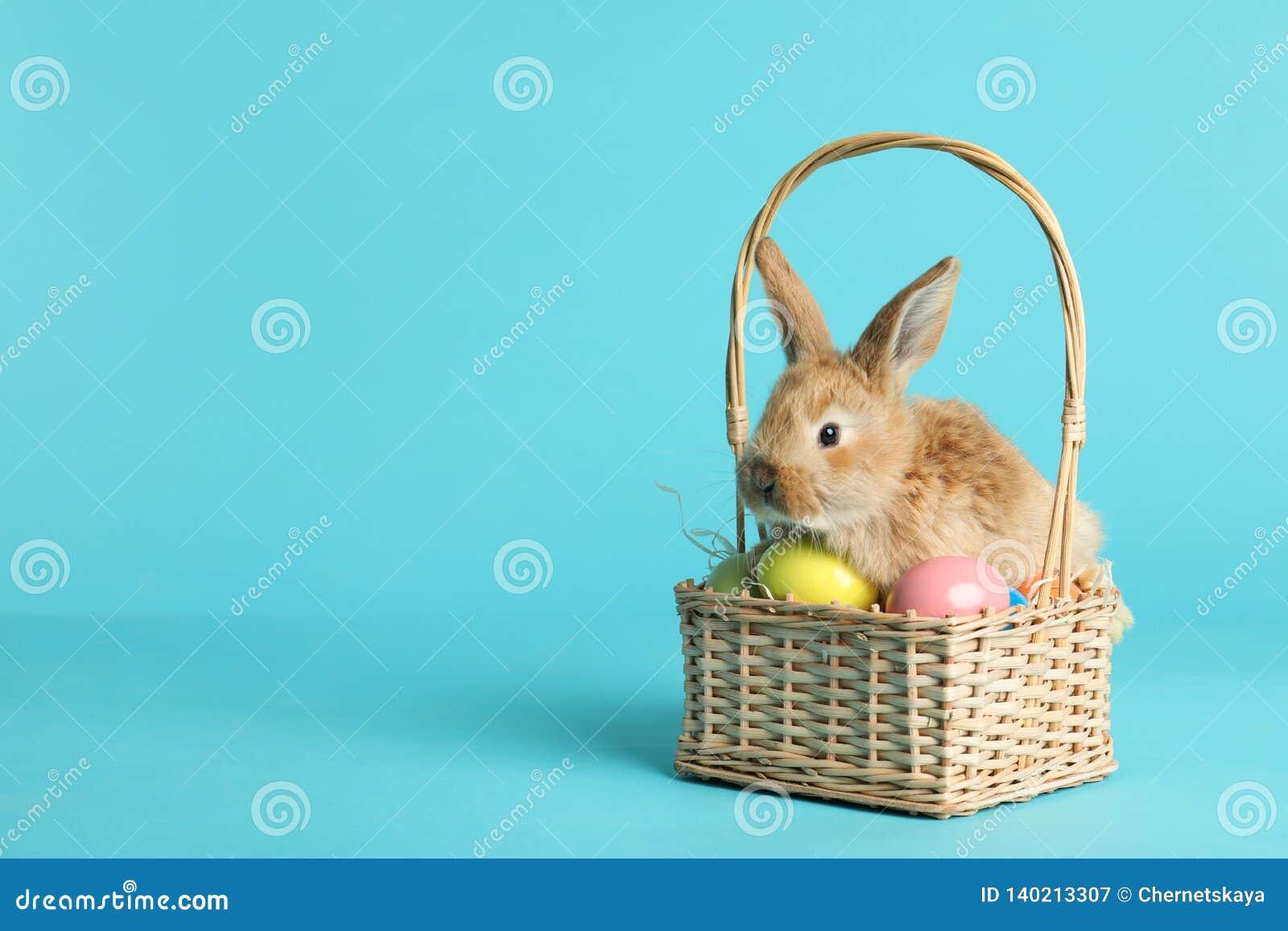 Coniglietto di pasqua simile a pelliccia adorabile in canestro di vimini con le uova tinte sul fondo di colore
