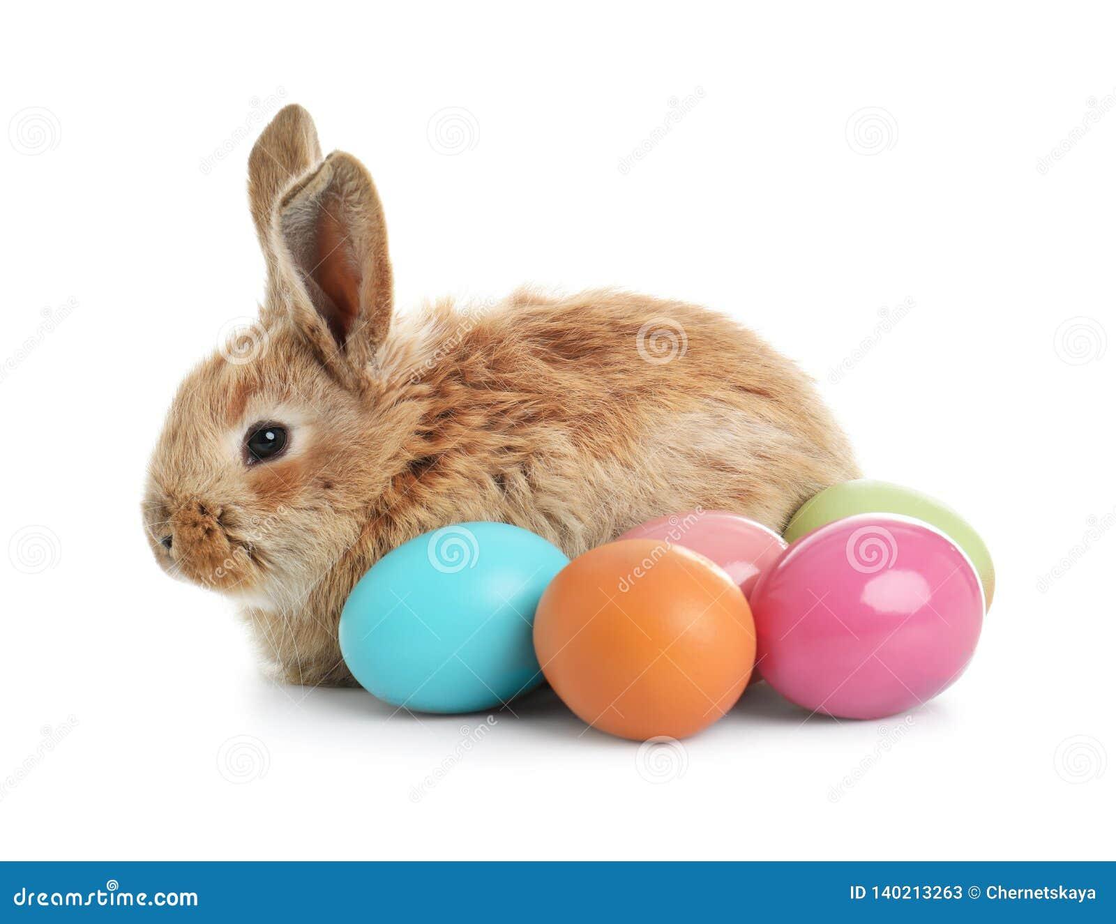 Coniglietto di pasqua simile a pelliccia adorabile ed uova variopinte