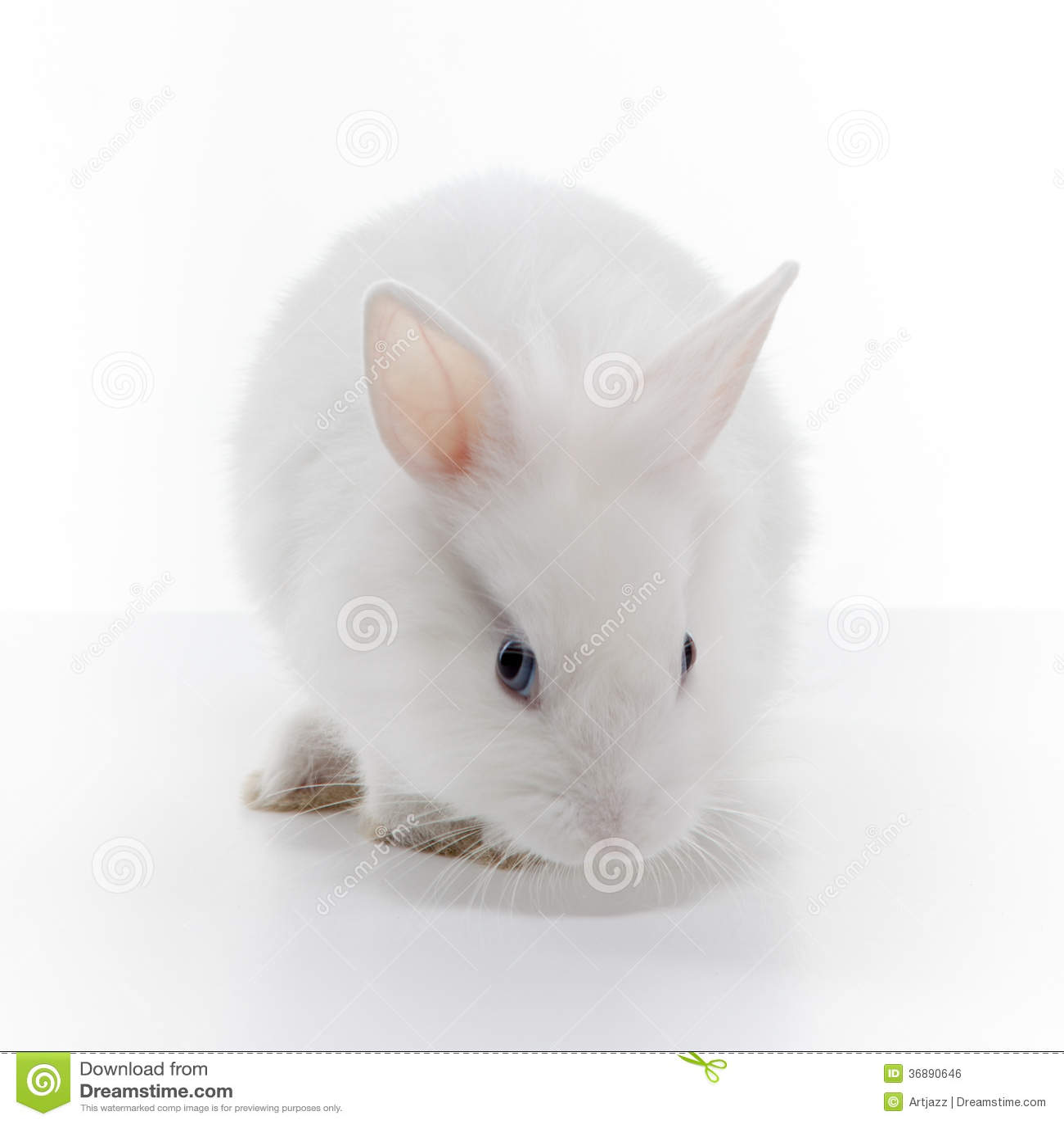 Download Coniglio Bianco Isolato Su Bianco Fotografia Stock - Immagine di pasqua, fleecy: 36890646
