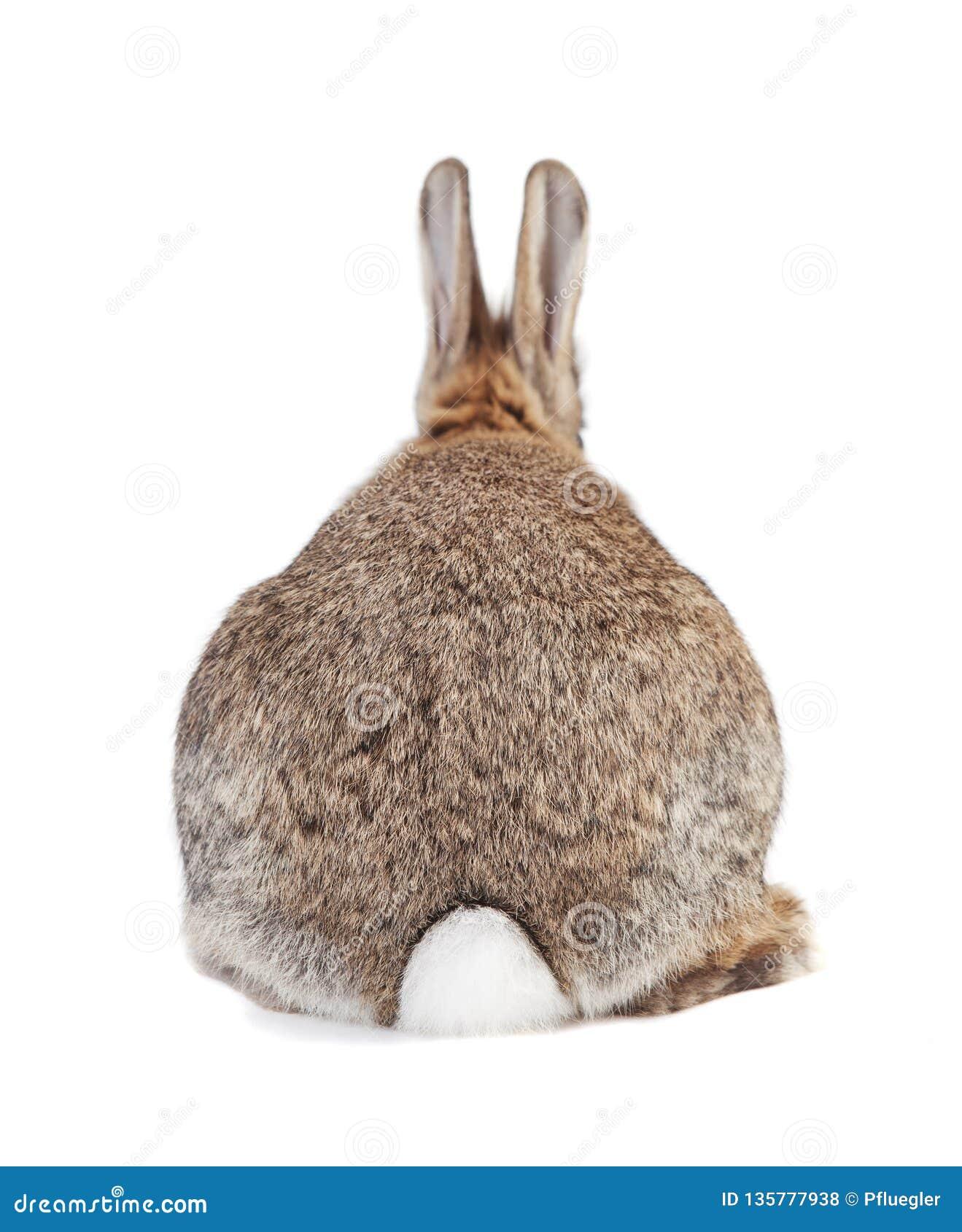 Coniglio da dietro