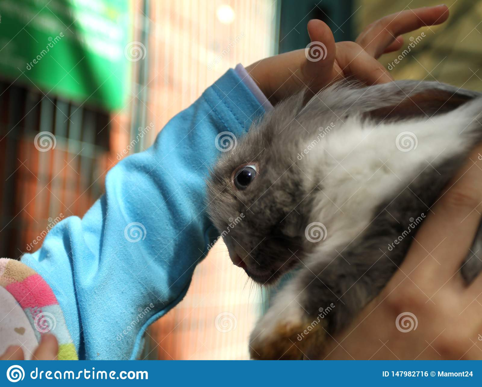 Coniglio della testarossa nello zoo