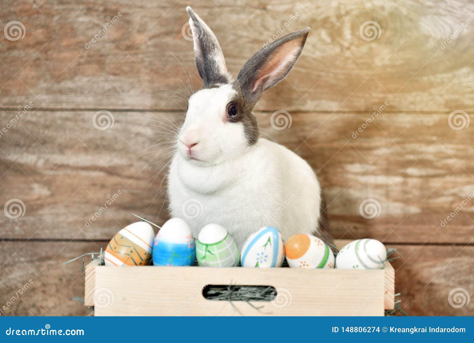 Coniglio di coniglietto grigio che sembra frontward allo spettatore, poco coniglietto che si siede sulla scatola di legno con i s
