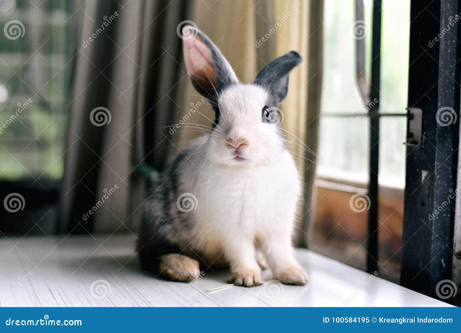 Coniglio di coniglietto grigio che sembra frontward allo spettatore, poco coniglietto che si siede sullo scrittorio bianco