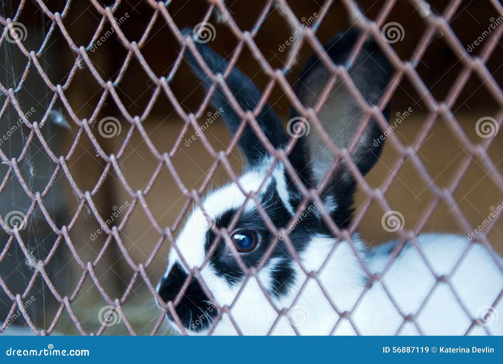 Coniglio di coniglietto in una gabbia