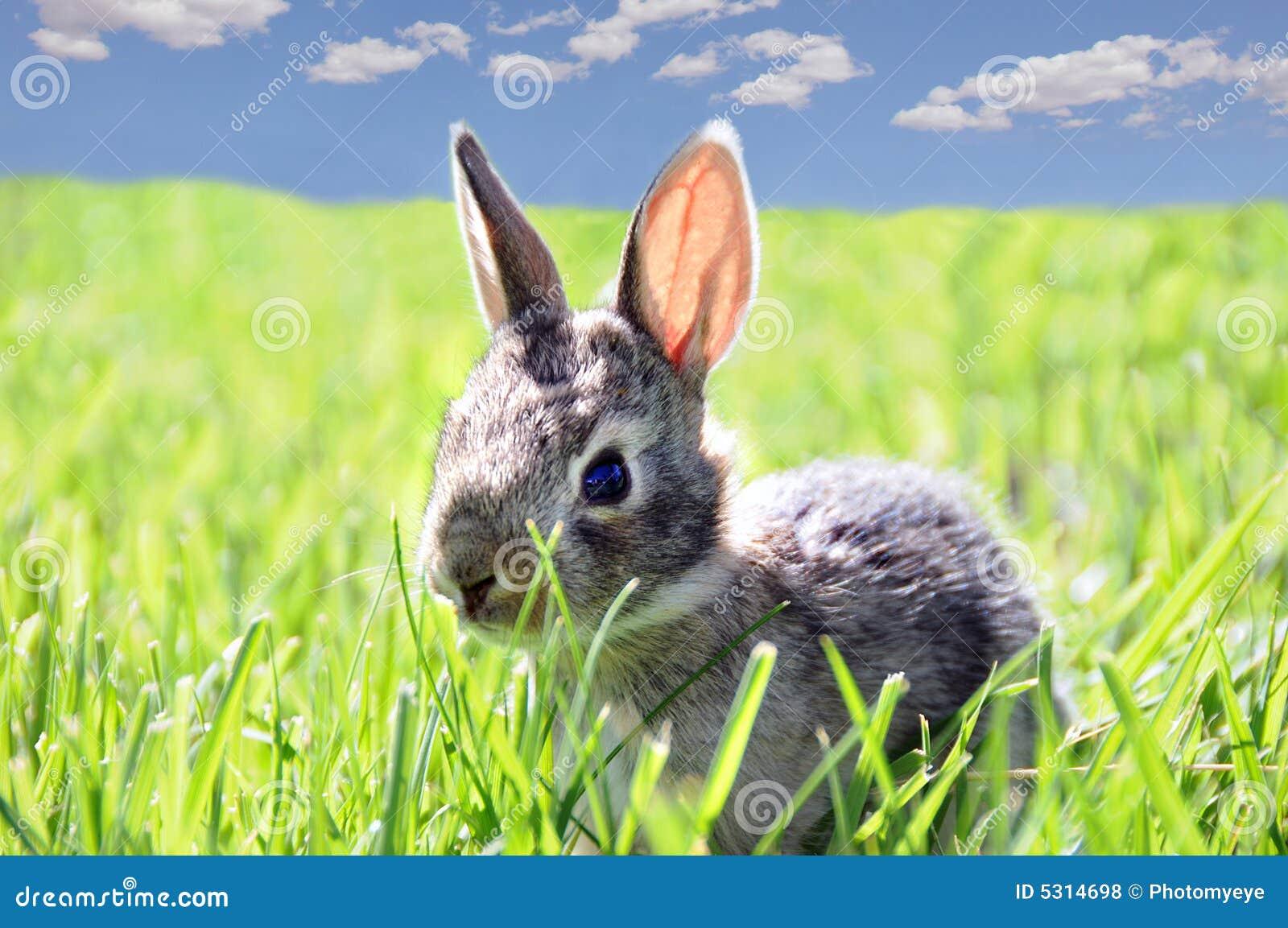Download Coniglio in erba fotografia stock. Immagine di giovane - 5314698