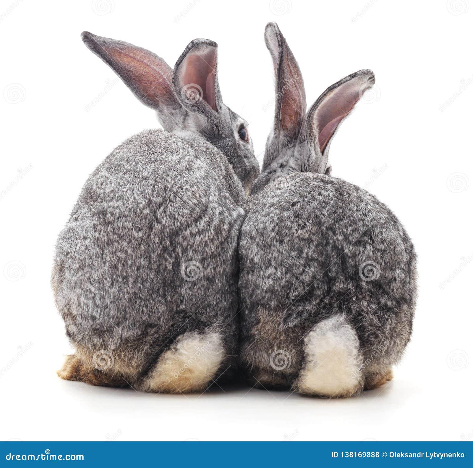 Coniglio tre indietro