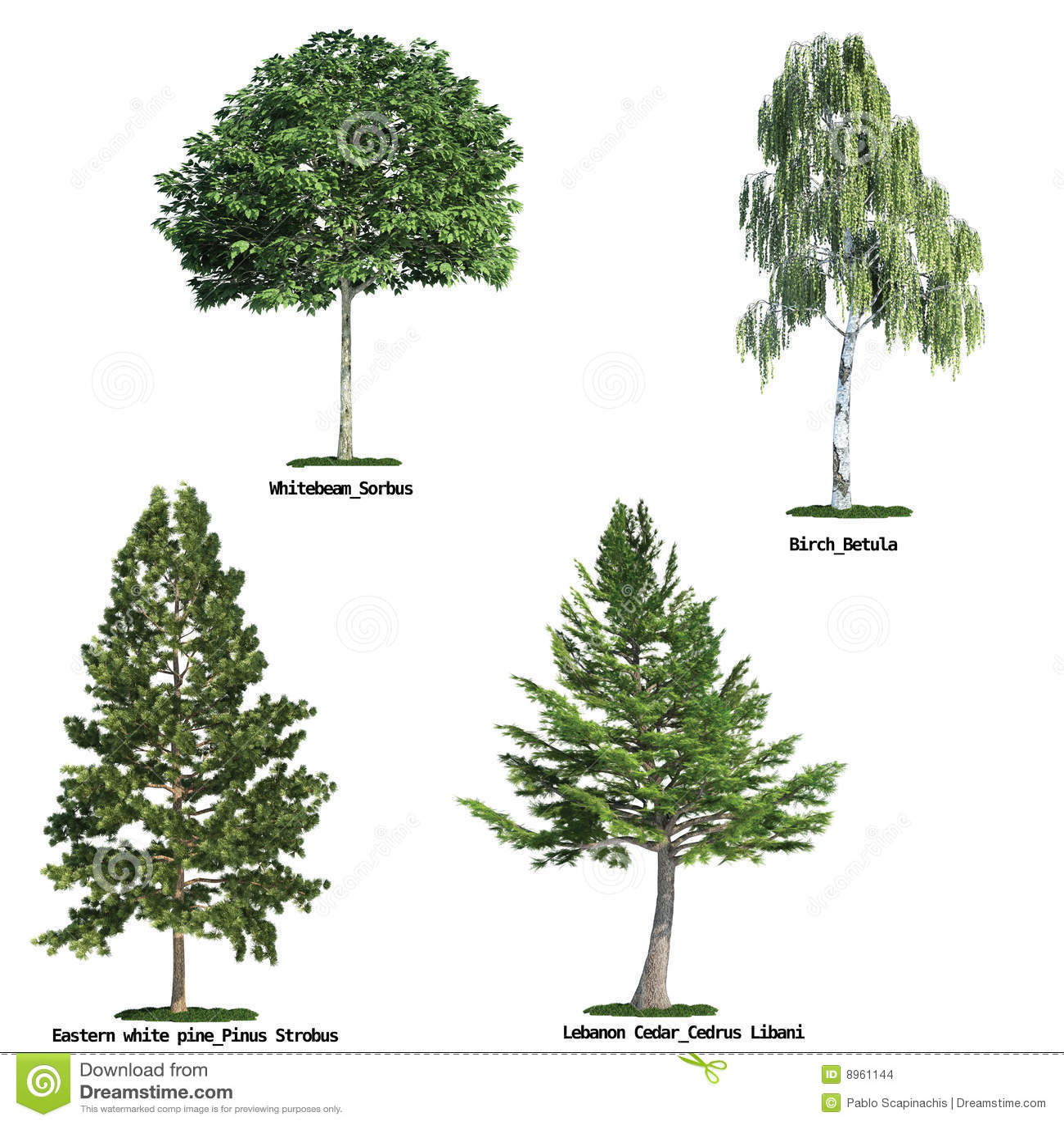 Conjunto de cuatro árboles aislados contra blanco puro
