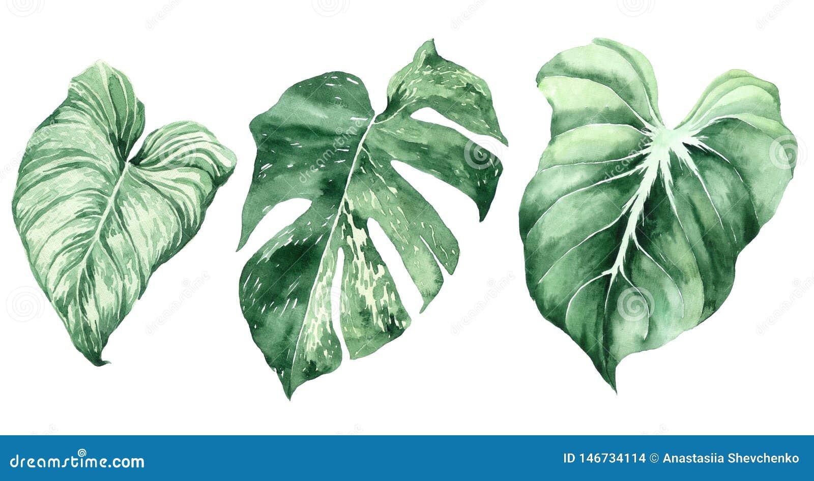 Conjunto de hojas tropicales Selva, ejemplos bot?nicos de la acuarela, elementos florales, hojas de palma, helecho y otros