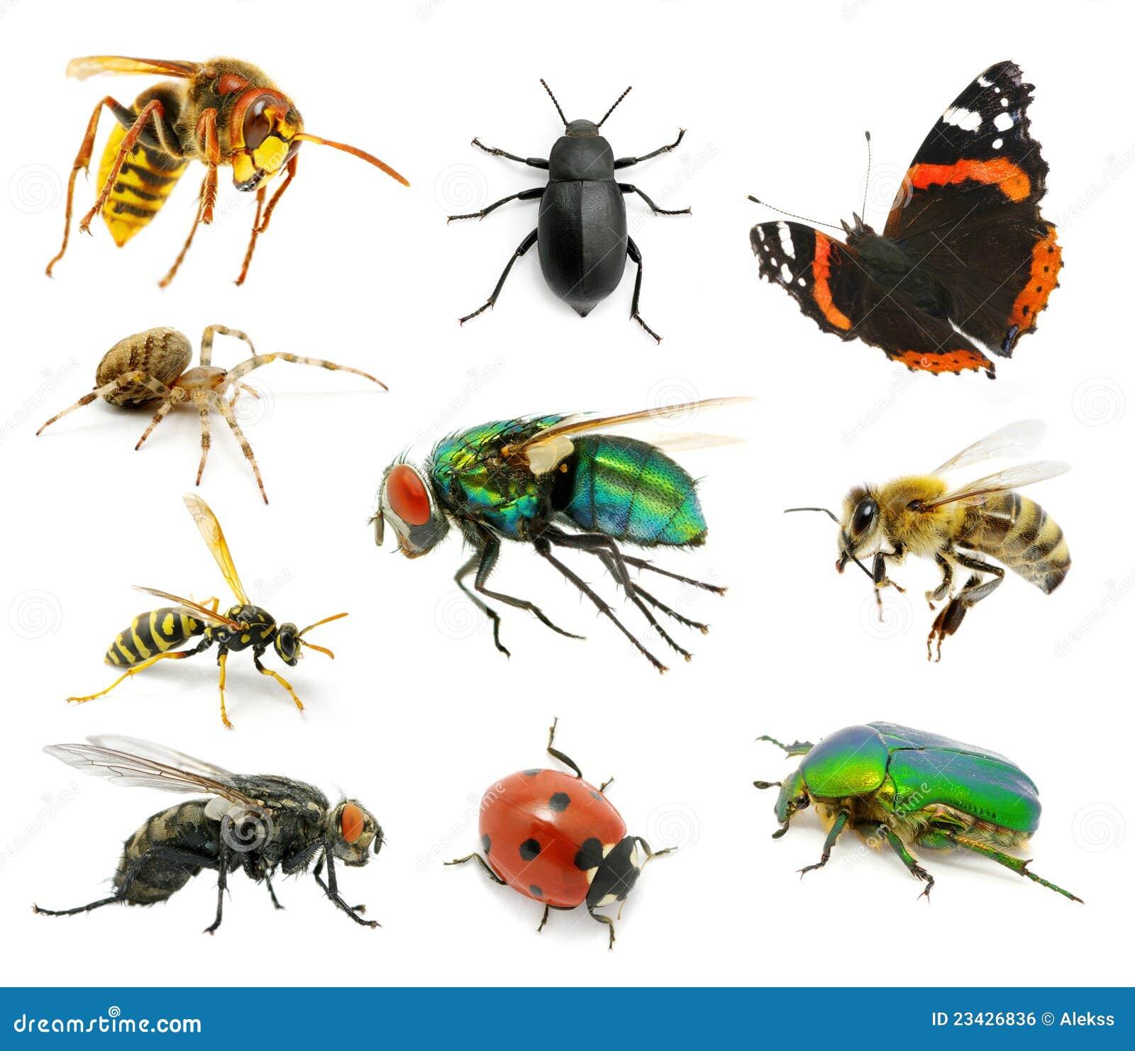 Conjunto de insectos foto de archivo. Imagen de hornet ...
