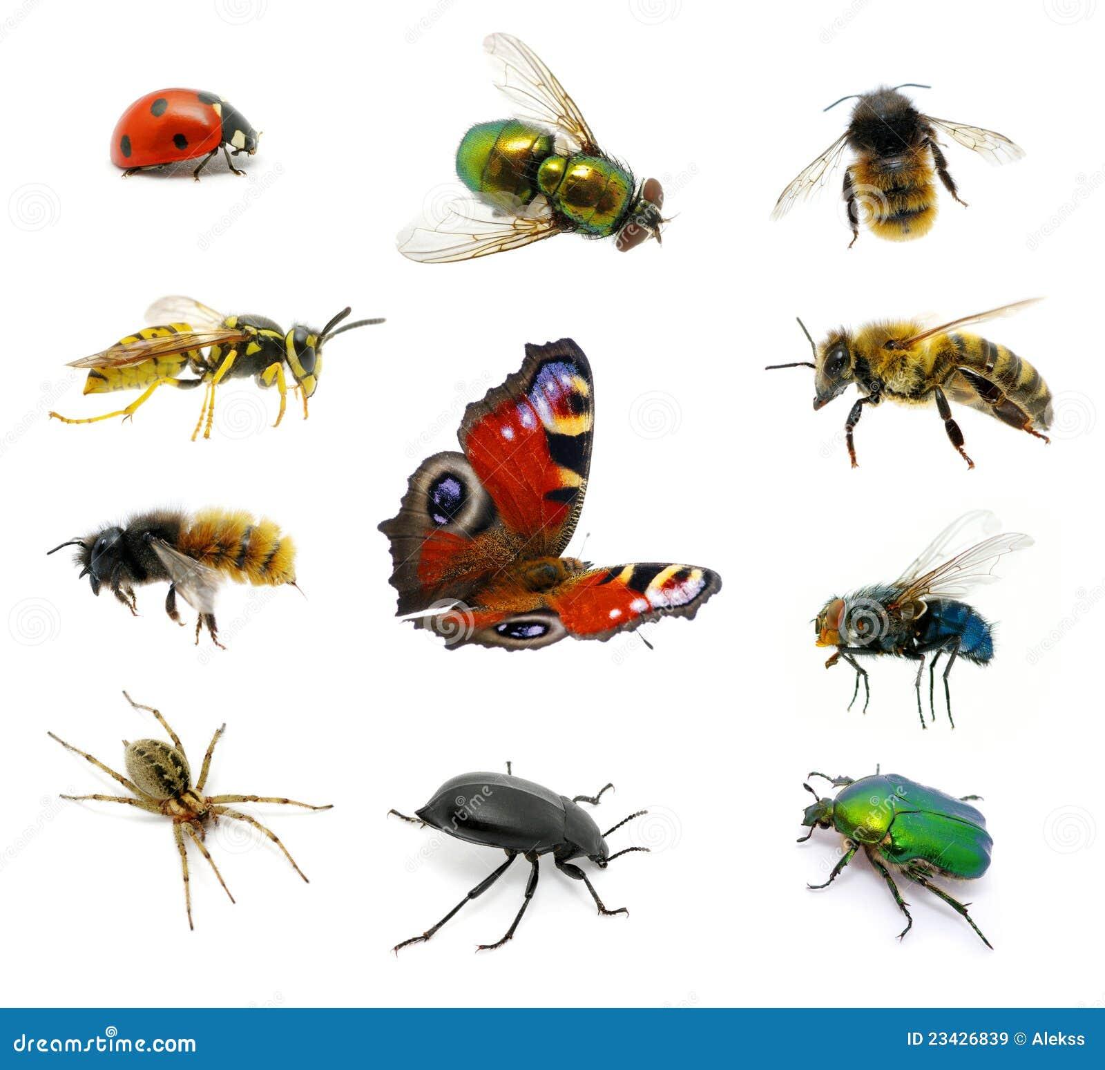 Conjunto de insectos imagen de archivo imagen de conjunto - Insectos en casa fotos ...