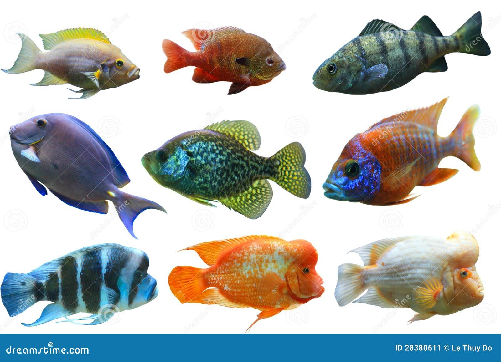 Conjunto de los pescados
