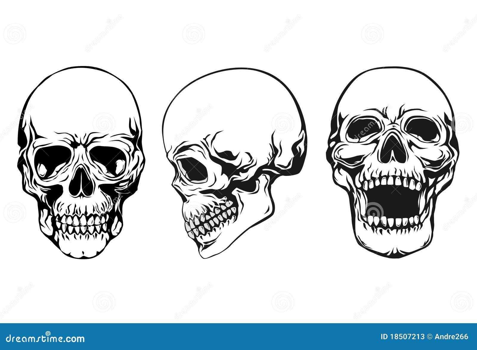 Conjunto del cráneo